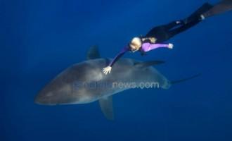 ცურვა ზვიგენებთან ერთად