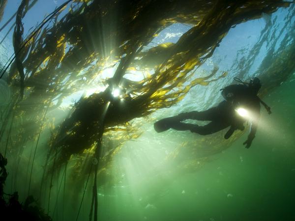 ბრიტანეთის კოლუმბია - პროვინცია წყნარი ოკეანიც სანაპიროზე, კანადა