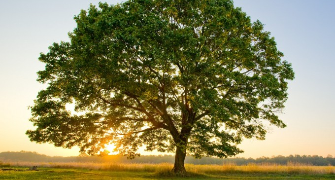 …დიდი ხე თავისთვის დგას და იყურება