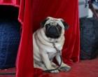 ძაღლების გამოფენა თავისუფალი უნივერსიტეტის კამპუსში