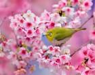 ზღაპრული სილამაზე ანუ გაზაფხულის ყვავილობა მსოფლიოს სხვადასხვა კუთხეში