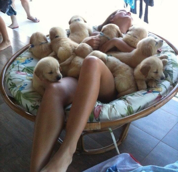 puppy_therapy