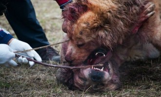 როგორ იცავენ ცხოველთა უფლებებს საქართველოში