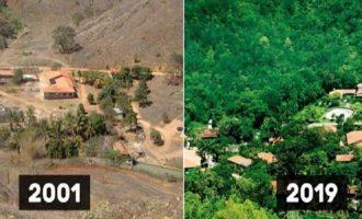 ბრაზილიელმა წყვილმა განადგურებული ტყე აღადგინა