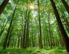 უნივერსიტეტში ჩარიცხვამდე აბიტურიენტმა, ფილიპინებში, 10 ხე უნდა დარგოს
